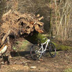 #belgium #wallonia #lux #wellin #bike #specialized #vtt