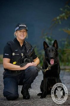 The diversity in Black German shepherd colors is due to the different colors of coat types. BGSD colors include tan, red, cream, grey, blue and rich black. Military Working Dogs, Military Dogs, Police Dogs, German Shepherd Colors, Black German Shepherd Dog, German Shepherds, Tres Belle Photo, Work With Animals, War Dogs