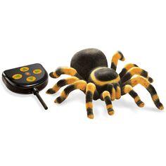 D'où viennent les araignées ? De quoi se nourrissent-elles ? Quelles sont les araignées les plus redoutables ? #araignée #radiocommandée #mygale #jardin