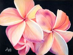 Plumeria flowers, X posted on Colored Pencil - WetCanvas