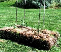 Basics of strawbale gardening