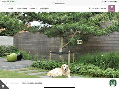 Fence, Plants, Plant, Planets