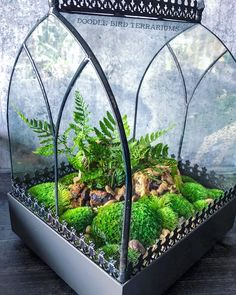 H Potter Terrarium Wardian Case - Glass Plant Container Planter - Terrarium Plants, Glass Terrarium Ideas, Fish Tank Terrarium, Fairy Terrarium, Terrarium Containers, Paludarium, Vivarium, Glass Planter, Backyard Lighting