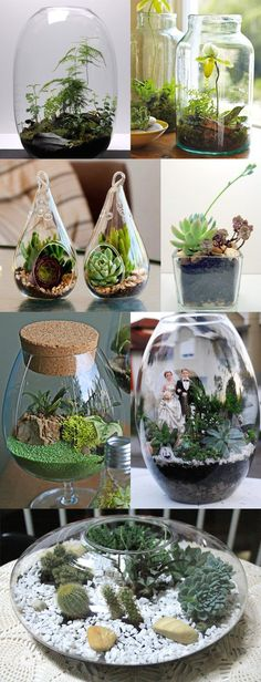 Clique na imagem e veja como fazer um mini jardim em pote de vidro mais conhecido como terrário. Ótimo para apartamentos pequenos e varandas!