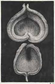 peter randall page drawings A Level Art Themes, Natural Forms Gcse, Peter Randall Page, Shapes Images, Elements And Principles, Organic Form, Botanical Drawings, Detailed Drawings, Gcse Art