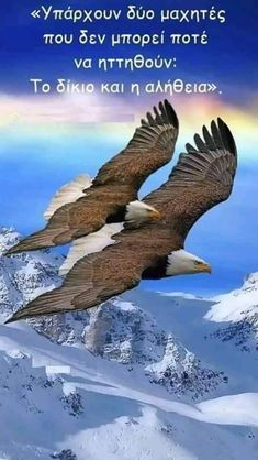 Share and view the most beautiful images from across the world! Eagle Images, Eagle Pictures, Nature Pictures, Exotic Birds, Colorful Birds, Beautiful Birds, Animals Beautiful, Nicolas Vanier, Our National Bird