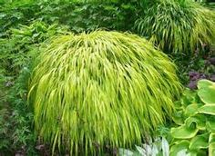 ornamental grass types - Bing images