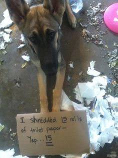 I shredded 15 rolls of toilet paper. Yep....15. (Mina's mama notes: I'm pretty sure she merely shredded the paper & actually ate very little, if any.)
