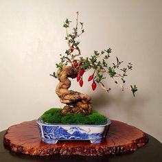 Found a high quality chili bonsai, this is me eating my words. - Imgur