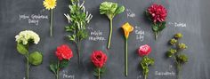 Q & A with a Floral Design Expert - The Glue String | The Glue String