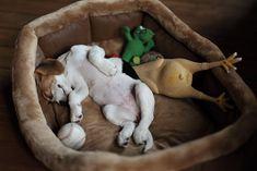 Beagles are so cute!