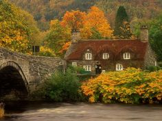 "octoberyet: "" Llanrwst bridge and court house covered in red ivy, North Wales """