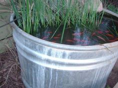 How to make a simple and cheap fish pond.  I think I'll do this and see how it works out