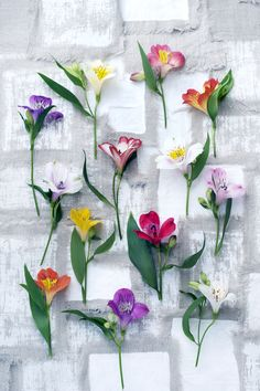 Twisted foliage and beautiful brightly coloured flowers: those are the characteristics of the Alstroemeria. It symbolised friendship, and that makes it the perfect flower to give to your best friends as a gift.