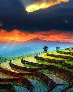 Que tal terminar o dia de hoje com essa linda imagem dos terraços de arroz em Chiang Mai?  #calçathai #tailândia #chiangmai #paisagem #fotografia #beleza #natureza