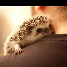 Seriously thinking about getting one of these instead of a second cat to keep Scout company...