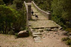 Corsica, Frankrijk. Ponte Vecchiu nabij Ota op de wandelroute Spelunca-kloof
