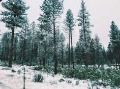 Snowy forest  ~My photography