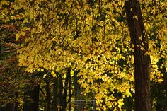 autumn leaves / lichtspiele IV by nadine schumacher