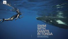 Snorkel with whales in Tonga  What can we say to describe the rush of swimming alongside a giant in the remote island of Tonga? Read writer Andy Isaacson's attempt in the ISLANDS Wish List December 2012 issue, available on the iPad and iPhone.