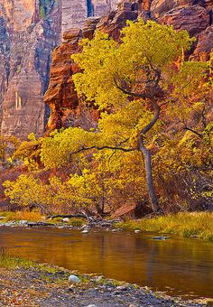 Zion National Park, Utah; photo by Gary Schmickle