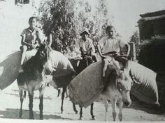 Cyprus tseri