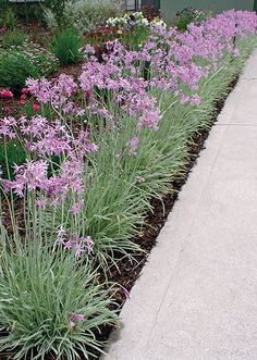 Edging Plants, Garden Plants, Shed Makeover, Flower Names, Front Yard Landscaping, Backyard, Driveways, Landscape, Window Boxes