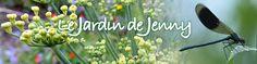 Consoude : culture, récolte, purin, paillage, compost