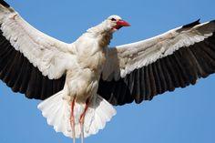 Birds Storks HD Wallpaper - http://whatstrendingonline.com/birds-storks-hd-wallpaper/