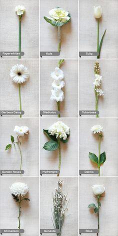 paperwhite, kale, tulip, gerbera daisy, gladiolus, tuberoses, garden rose, hydrangea, dahlia, chinamum, genesta, rose