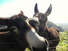 Cathartic donkeys-Pulsano,Gargano,southern Italy!
