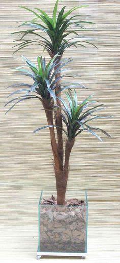 Vaso de vidro com cascas - Planta alta e com pouco volume