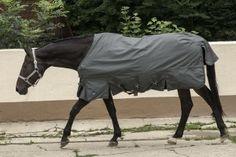 Pferdedecke mit maximaler Bewegungsfreiheit