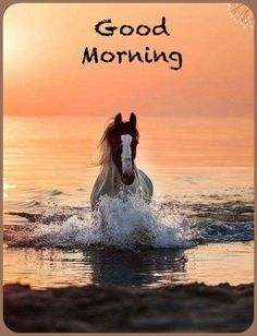 Happy Morning Quotes, Good Day Quotes, Morning Thoughts, Good Morning Greetings, Morning Humor, Good Morning Wishes, Funny Morning, Good Morning Picture, Morning Pictures