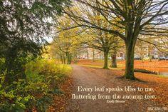 Autumn - Bronte