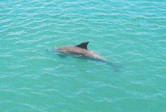 Dolphin Beach Road Bridge Manasota Key Dolphin