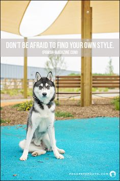 This #husky certainly has his own style of 'sit!'