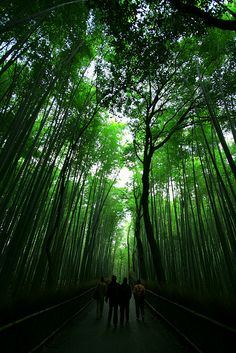Postcard from Arashiyama by PacoAlcantara #Photography #Forest #Japan #Arashiyama