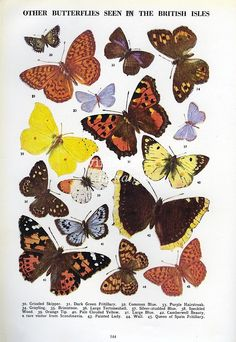 Butterfly print vintage butterfly art plate natural history decor. $12.95, via Etsy.