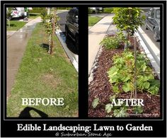 Edible Landscaping: From Lawn to Garden - begin converting your lawn into a self-sufficient garden for your family