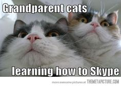 Grandparent Cats learning how to skype - Follow @showmeCats - #showmecats #thefunny #FunnyCats