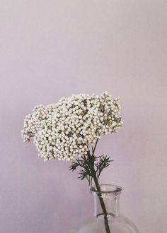 Rice Flower Berries