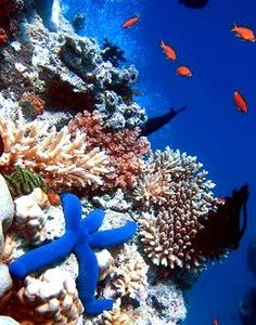 Sea life.  It looks like a little blue man, I've fallen & I can't get up.....