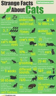Interesting cat facts! Get even more by downloading Curious Cat Facts on the App Store!