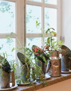 4-horta-dentro-de-casa