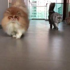 super Ideas for funny animals giffs happy Cute Funny Animals, Cute Baby Animals, Cute Cats, Animals And Pets, Funny Cat Jokes, Funny Cat Videos, Funny Cats, Kittens Cutest, Cats And Kittens