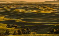 Palouse summer sunrise bliss - Steptoe Butte in the Palouse Region offers outstanding summer views at sunrise in all directions! This one is looking east to Idaho. Wheat Fields, Lush Green, Photos Of The Week, Wonderful Places, Tuscany, Landscape Photography, Travel Photography, Places To See, North America