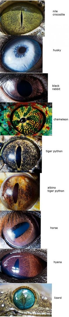 "Animal eyes....talking about eyes, there's a  Good point in the February Awake 2013 magazine, ""A designer of robots explains his faith""."