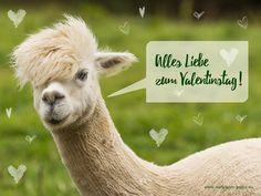Tier wünscht alles Liebe zum Valentinstag 003 - Hintergrundbild kostenlos