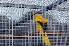 Captivity, Cage, Bird Cage, Bird
